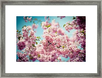 Pink Cherry Blossoms Sakura Framed Print