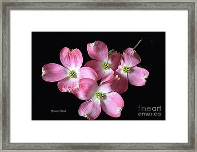 Pink Dogwood Branch Framed Print by Jeannie Rhode