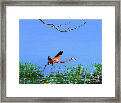 Pink Flamingo Framed Print by Jerry L Barrett
