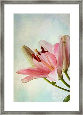 Pink Lilies Framed Print by Nailia Schwarz