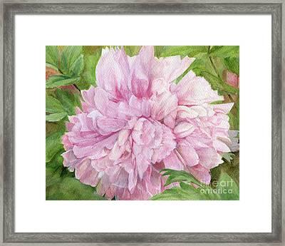 Pink Peony Framed Print