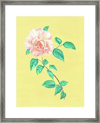 Framed Print featuring the painting Pink Rose by Elizabeth Lock