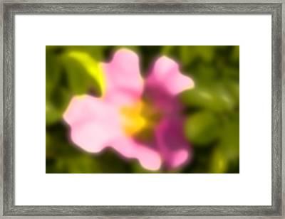 Pink Rose Framed Print by Jouko Mikkola
