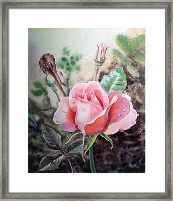 Pink Rose With Dew Drops Framed Print by Irina Sztukowski