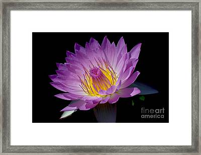Pink Sapphire Framed Print