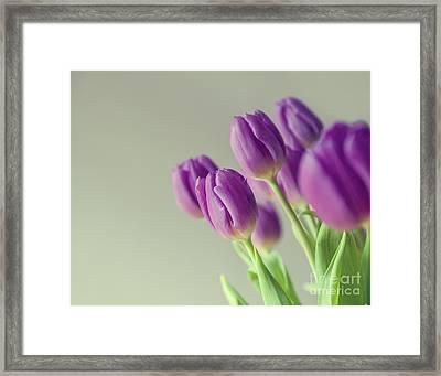 Pink Tulips Framed Print by Patricia Hofmeester
