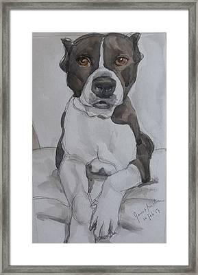 Pit Bull Framed Print by Janet Butler