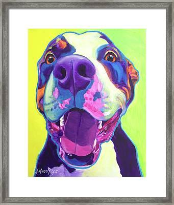 Pit Bull - Mayhem Framed Print