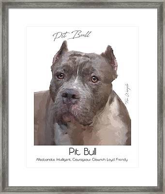Pit Bull Poster Framed Print by Tim Wemple