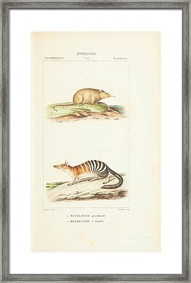 Planches  By Paul Gervais Framed Print by Paul Gervais
