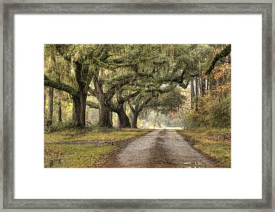Plantation Drive Live Oaks  Framed Print by Dustin K Ryan