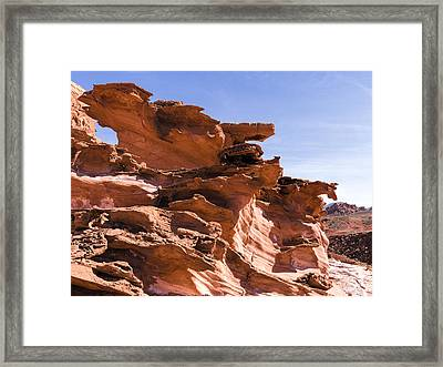 Plants And Birds And Rocks And Things Framed Print