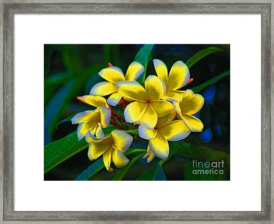 Framed Print featuring the photograph 1- Plumeria Perfection by Joseph Keane