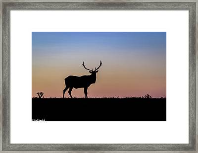 Point Reyes Elk Framed Print