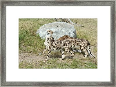 Framed Print featuring the photograph Poise by Fraida Gutovich