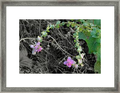 Framed Print featuring the photograph Pop Of Color  by Deborah  Crew-Johnson