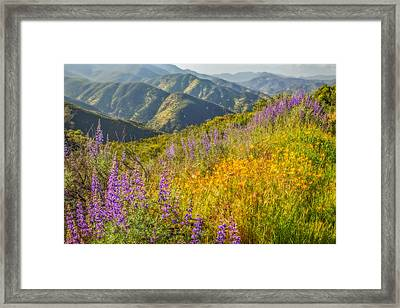 Poppies And Lupine Framed Print