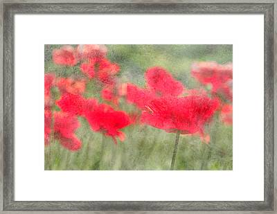Poppies Framed Print by Catherine Alfidi