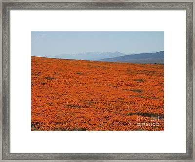Poppy Field II Framed Print