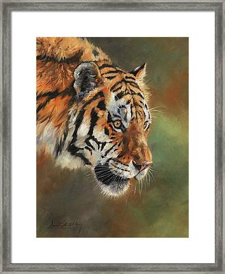 Portrait Of An Amur Tiger Framed Print