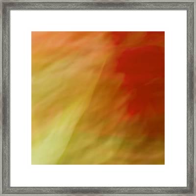 Portulaca II Framed Print