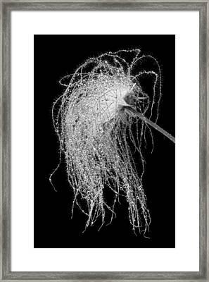 Prairie Smoke    Framed Print by Jim Hughes