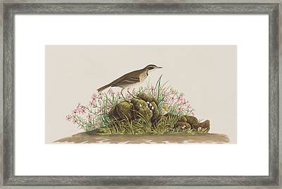 Prairie Titlark Framed Print by John James Audubon