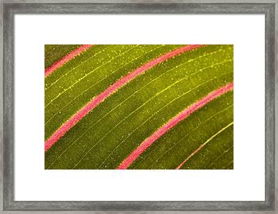 Framed Print featuring the photograph Prayer Plant Maranta Leuconeura by Gabor Pozsgai