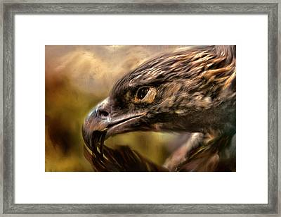 Preening Framed Print by Jai Johnson
