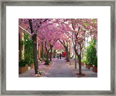Prettiest Street In Philadelphia Framed Print by Andrew Dinh