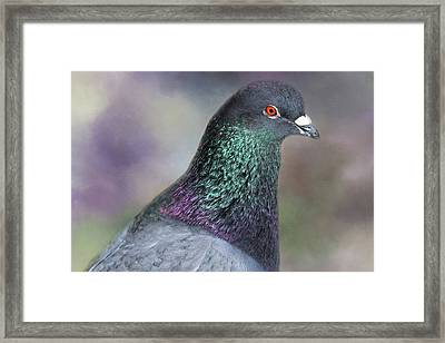 Framed Print featuring the photograph Pretty Boy by Donna Kennedy