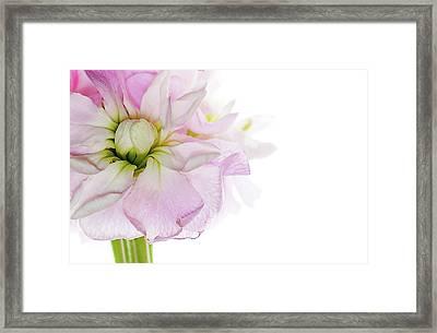 Pretty In Pink Framed Print by Rebecca Cozart