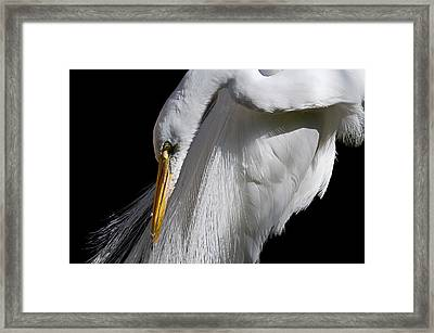 Framed Print featuring the photograph Pretty In White by Thanh Thuy Nguyen