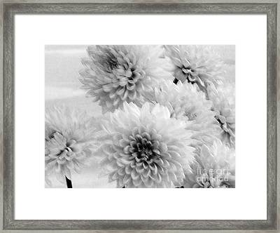 Pretty Petals Framed Print by Marsha Heiken