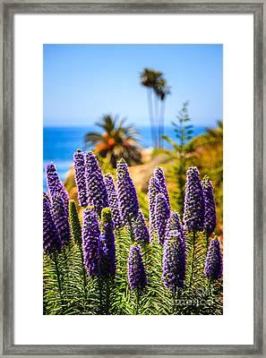Pride Of Madeira Flowers In Orange County California Framed Print