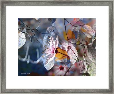 Primavera Framed Print by Alfonso Garcia