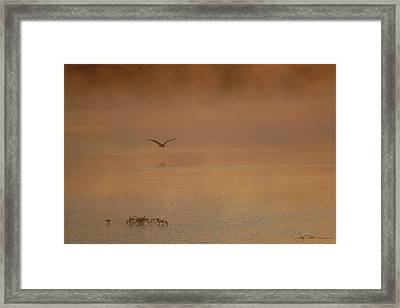 Primeval Dawn Framed Print