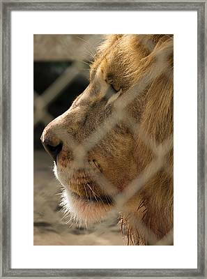 Profile Of A King Framed Print