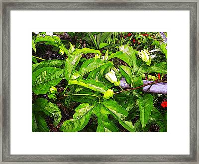 Promise Framed Print by Winsome Gunning