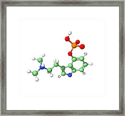 Psilocybin Hallucinogen Molecule Framed Print by Dr Tim Evans