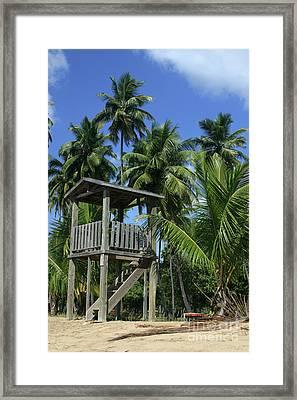 Puerto Rico Palms Framed Print by Madeline Ellis