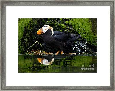 Puffin Reflected Framed Print