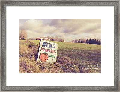 Pumpkins For Sale Framed Print