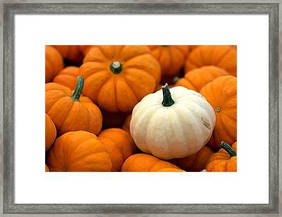 Pumpkins Framed Print by Joseph Skompski