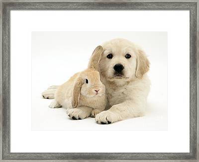 Puppy And Bunny Framed Print by Jane Burton