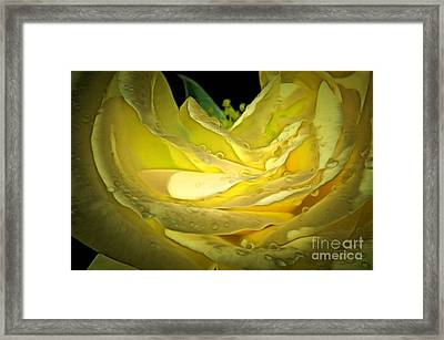 Pure Joy Framed Print by Krissy Katsimbras
