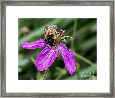 Purple Flower 3 Framed Print