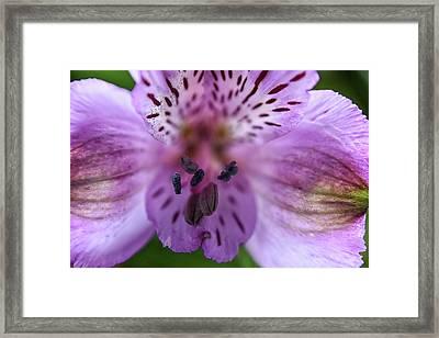 Purple Flower Framed Print
