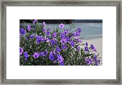Purple Flowers. Framed Print by Nhi Ho Thi Xuan