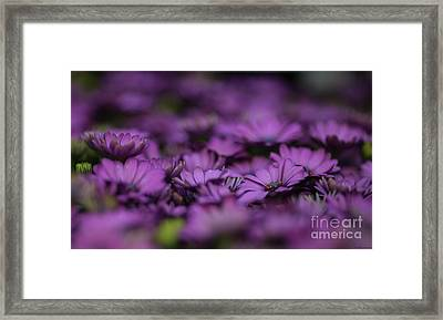 Purple Mood Framed Print by Eva Lechner